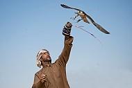 Du lịch Dubai- Hàng trăm người nuôi chim ưng tụ họp về giải thi đấu Fazza