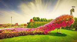 Có Một Vườn Hoa Lớn Nhất Thế Giới Giữa Lòng Sa Mạc