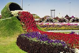 Khám phá vườn hoa lớn nhất thế giới ở Dubai