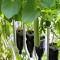 Vườn rau xanh tại Dubai của kỹ sư Việt Nam