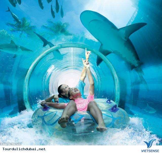 Chạm trán cá mập tại thành phố Dubai - Ảnh 2