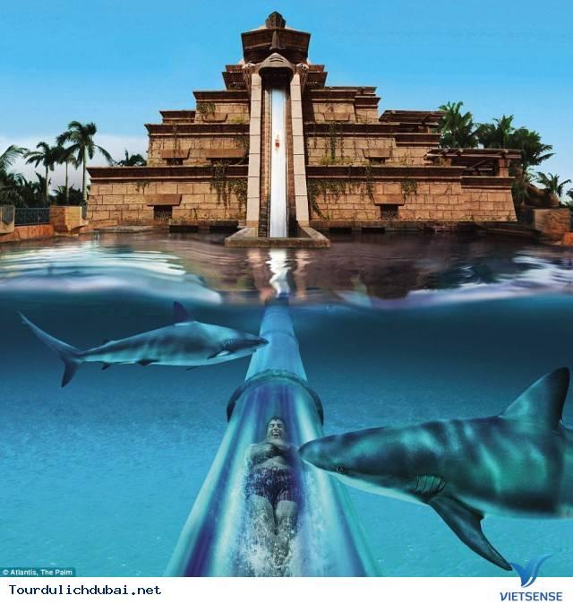 Chạm trán cá mập tại thành phố Dubai - Ảnh 3
