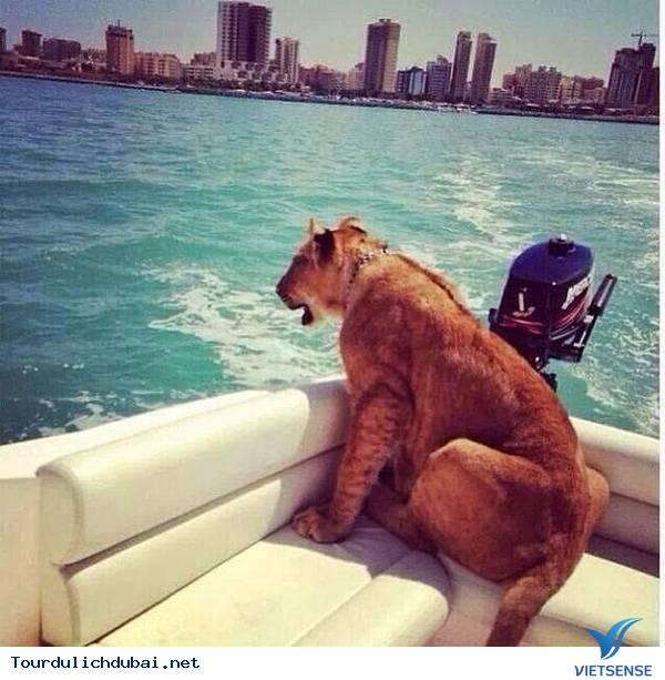 Choáng với những điều không tưởng tại thành phố Dubai