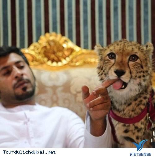 Đại gia Dubai và những thú vui cá biệt - Ảnh 8