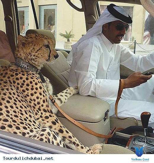 Tổng hợp những thắc mắc về Dubai giành cho bạn đọc - Ảnh 18
