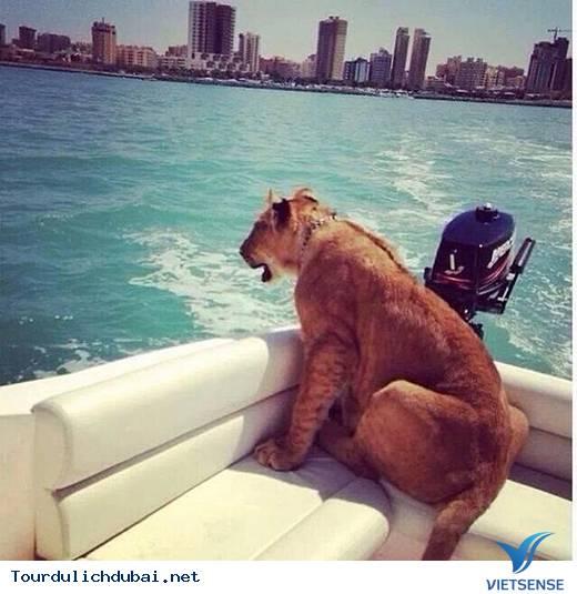Tổng hợp những thắc mắc về Dubai giành cho bạn đọc - Ảnh 14