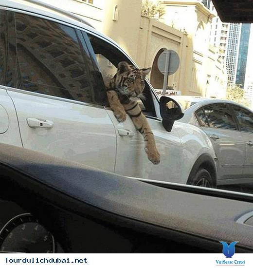 Tổng hợp những thắc mắc về Dubai giành cho bạn đọc - Ảnh 17