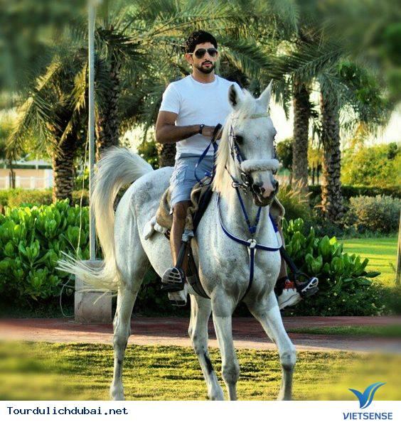 Ngắm nhìn hoàng tử Dubai chuẩn soái ca - Ảnh 6