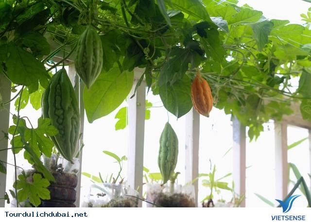 Vườn rau xanh tại Dubai của kỹ sư Việt Nam - Ảnh 2