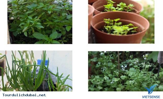 Vườn rau xanh tại Dubai của kỹ sư Việt Nam - Ảnh 7